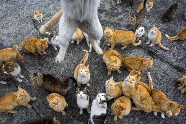 The-Japanese-Cat-Island_10-640x426