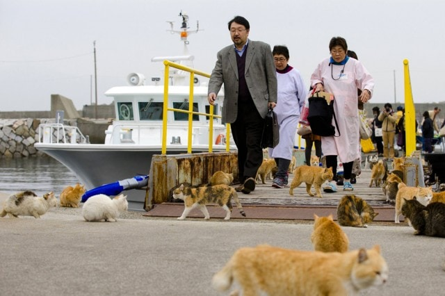 The-Japanese-Cat-Island_2-640x426