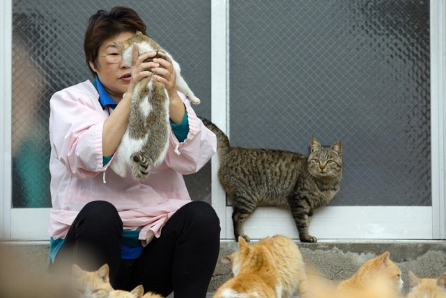 The-Japanese-Cat-Island_4-640x428