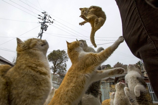 The-Japanese-Cat-Island_5-640x426