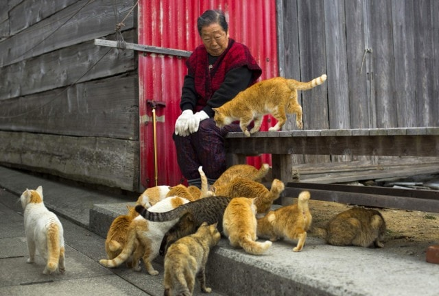 The-Japanese-Cat-Island_6-640x432