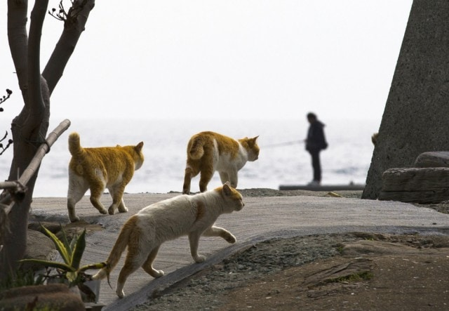 The-Japanese-Cat-Island_8-640x443